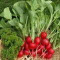 Σπαρτική λαχανικών